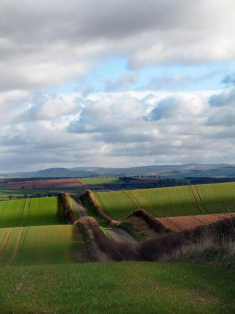 Looking towards the Cheviot Hills, Northumberland