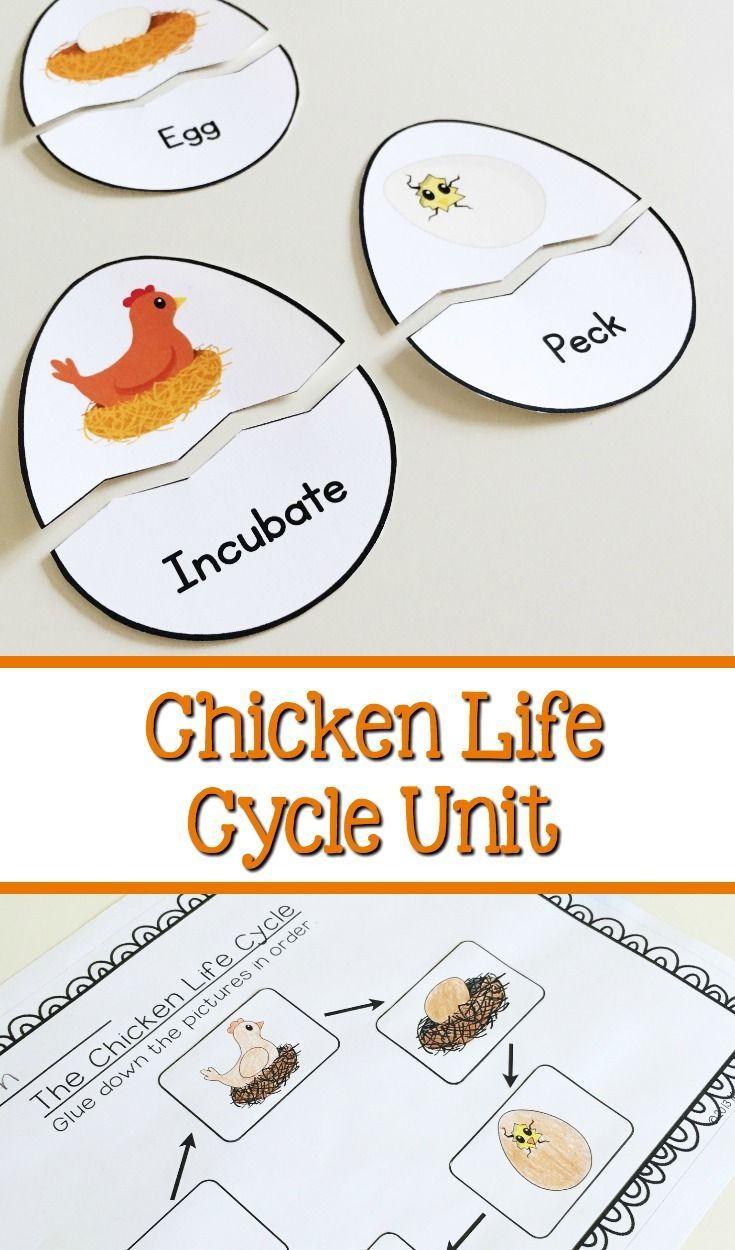 chicken cycle images reverse search. Black Bedroom Furniture Sets. Home Design Ideas