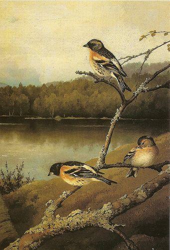 """""""Chaffinches"""" - """"Järripeippoja"""", oil painting 1894, Ferdinand von Wright (1822-1906)"""