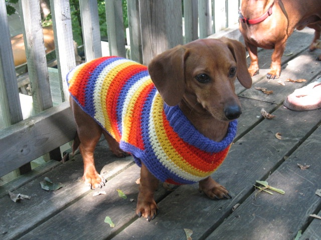 Striped dog coat