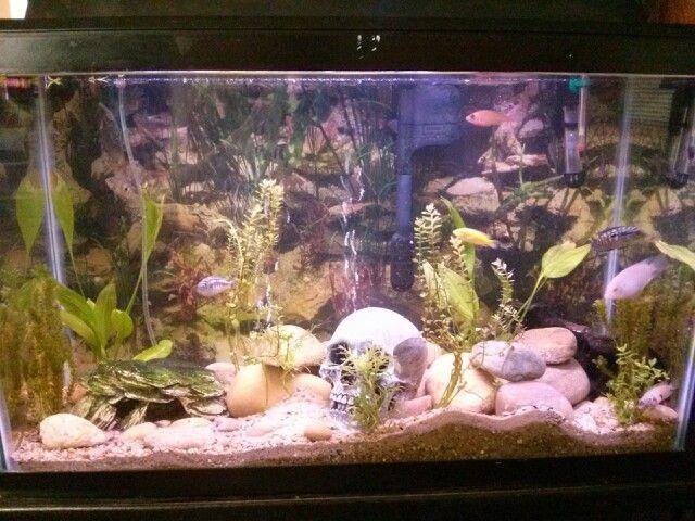 Our 30 gallon African Cichlid aquarium