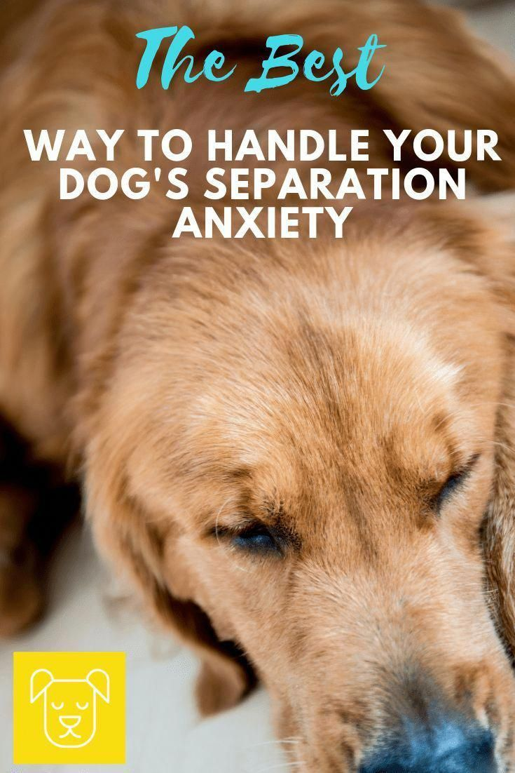 Pin On Dog Training Behaviour