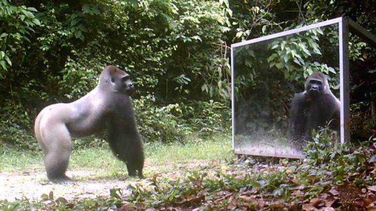 Den franske fotografen Xavier Hubert Brierre satt opp speil i jungelen for å ta bilder av ville dyr med skjult kamera. Resultatet er fascinerende.