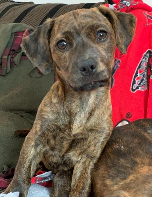 This lonely pup needs a home. Dachshund / Mixed (short