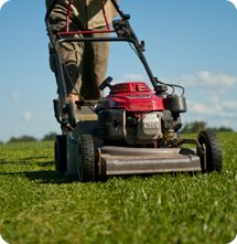 Sir Walter Love Your Lawn Lawn care tips