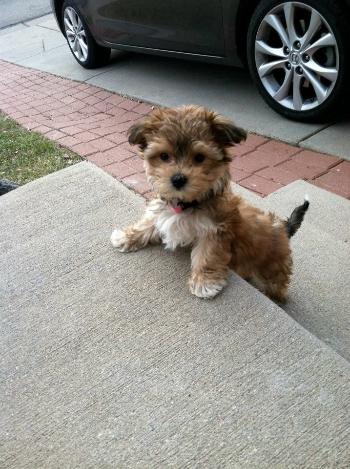 BEYOND CUTE. A DOGGY JUST LIKE THIS THATLL STAY LIKE THIS FOREVER. THAT WILL ONLY BARK LIKE A LITTLE BABY AND OMG TRAINED