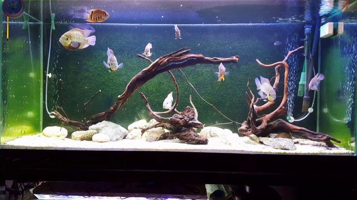 Central american aquarium