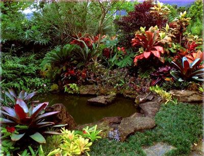 Garden and Landscape Ideas: tropical plantings with water feature