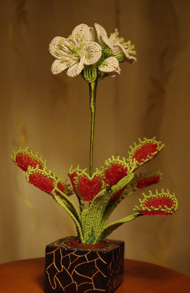 Комнатные цветы фото с названиями аглаонема