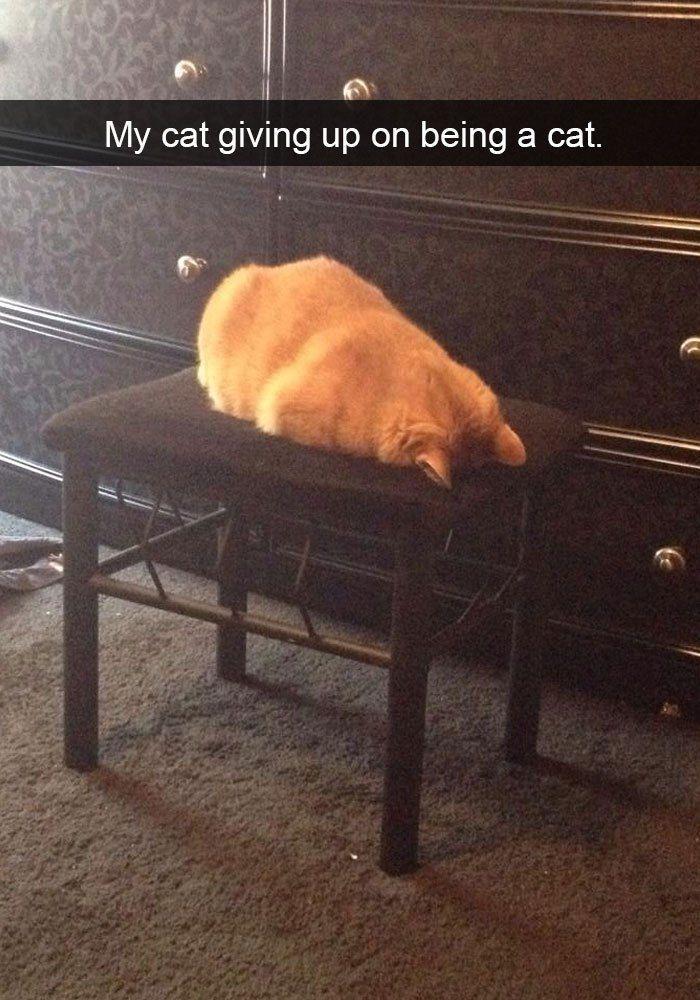 19+ lustige Katzen-Snapchats, die Sie benötigen, …