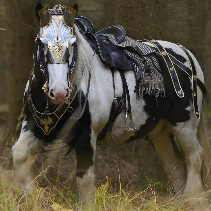 A soldier's horse. Ready to ride.