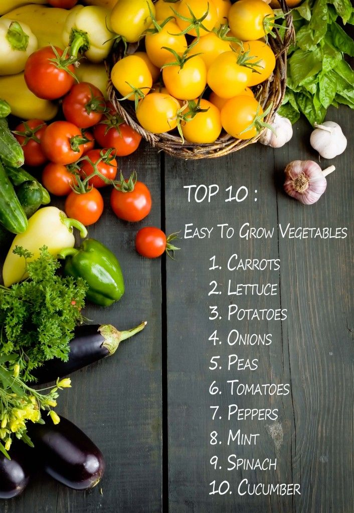 Top 10 easy to plant vegetables! Maybe I'll have a garden :)