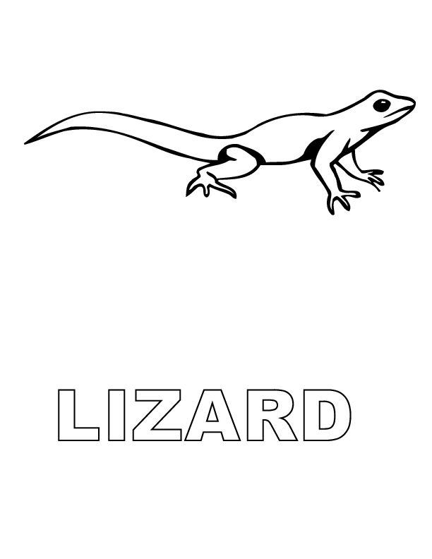 lizard outline | place for young artists to draw lizard ...