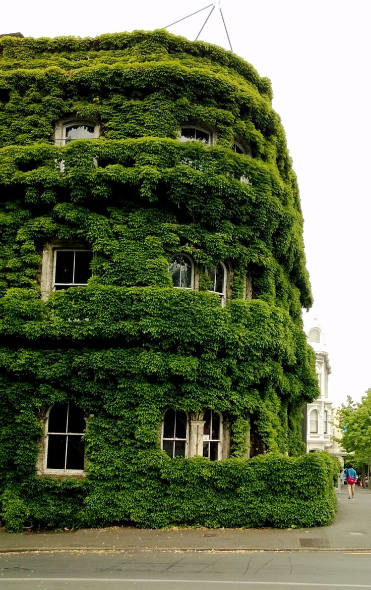 Ivy covered building in central Auckland