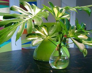 M s de 25 ideas fant sticas sobre jardiner a hidrop nica for Concepto de plantas ornamentales