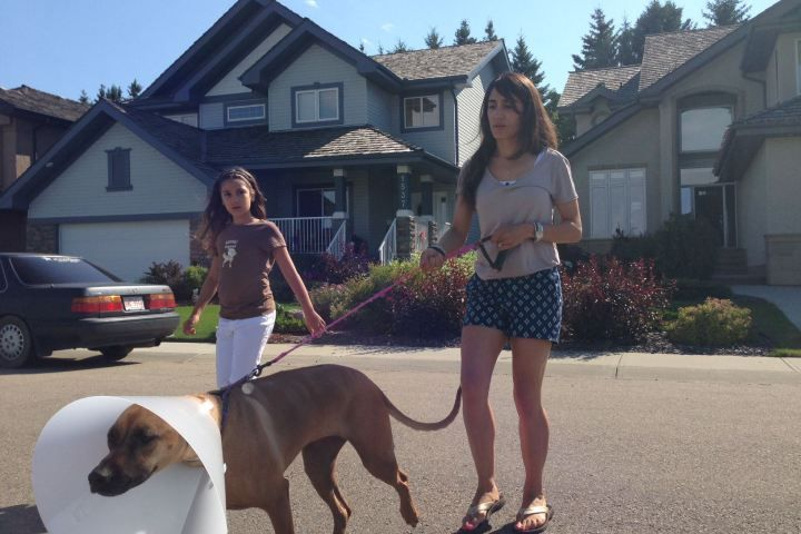 Large dog attacked by coyotes in Edmonton; family warning pet owners