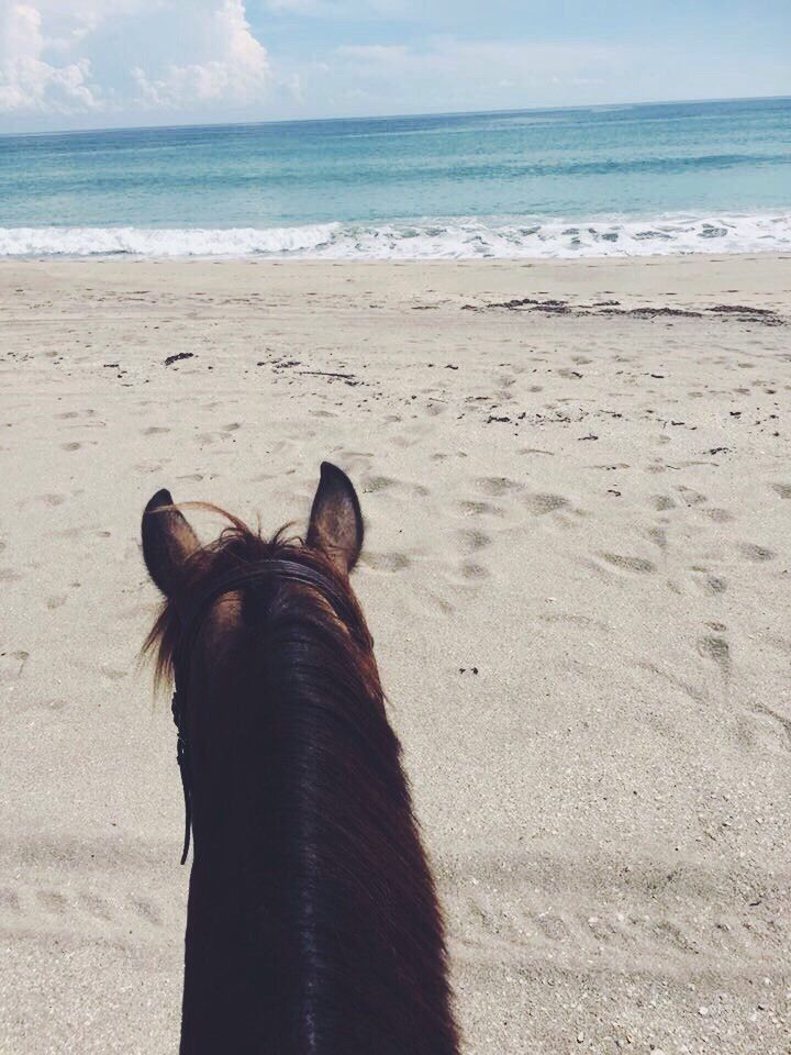 View of beach from back of a horse. Oh, just lovely!