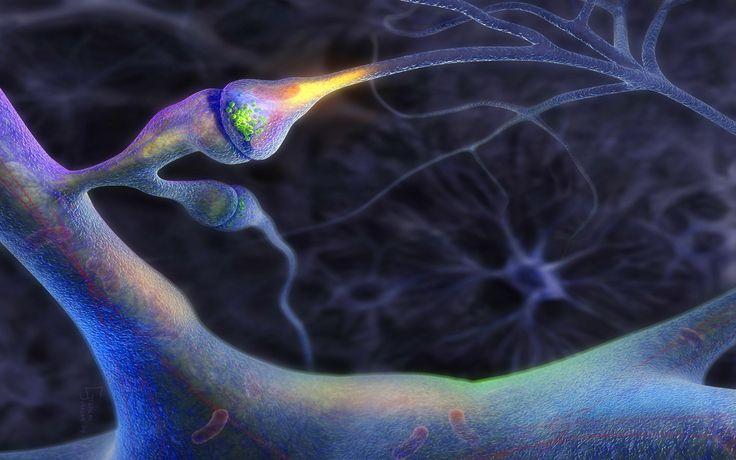 brain neuron wallpaper download - photo #1