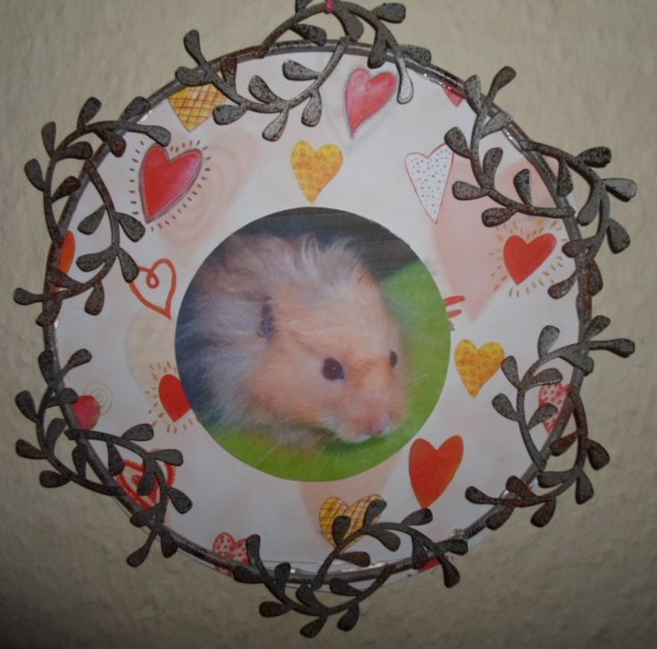 My hamster Poro on a heart background in a frame.