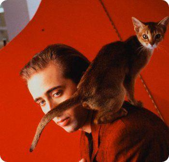 nicolas cage con su gato Famosos posando con sus gatos