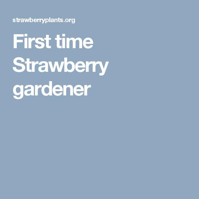 First time Strawberry gardener