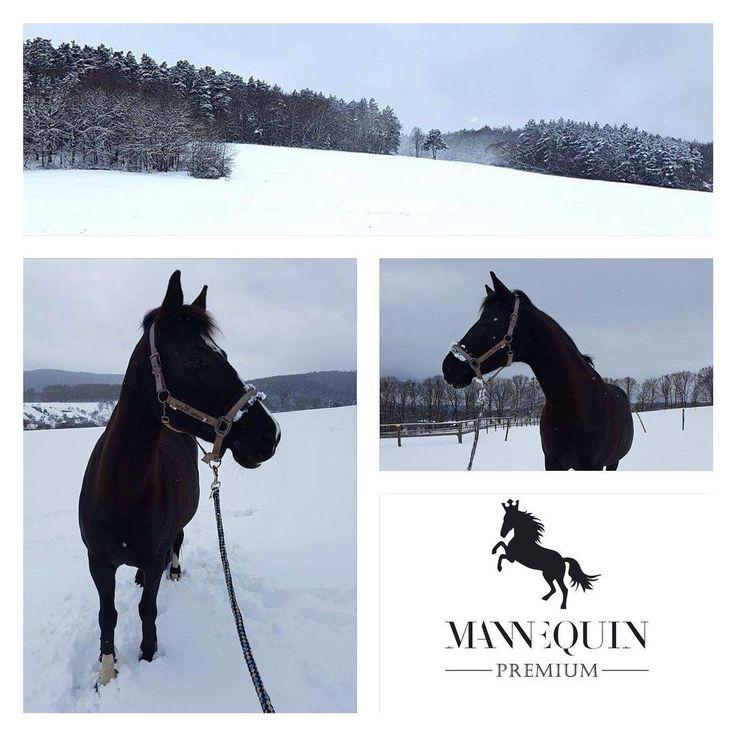 ... finally real winter! Kuka is enjoying the snow! Wonderful morning up the hills at Gazdovstvo Uhliska! #winter #snow #horse #fun #gazdovstvouhliska #mannequin #trencin #slovakia