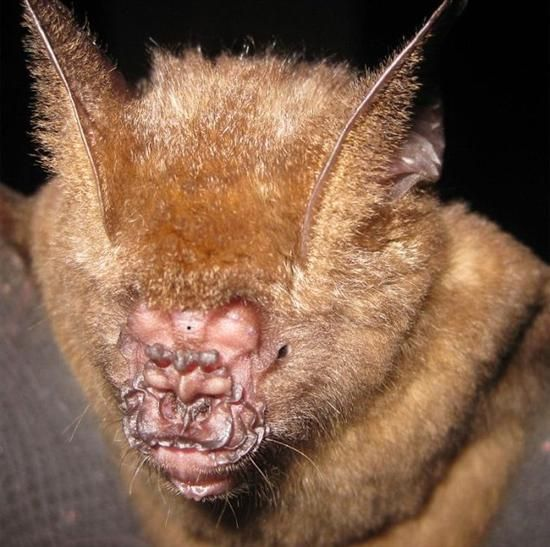 17 best Ugliest animals n other in this world images on Pinterest ...