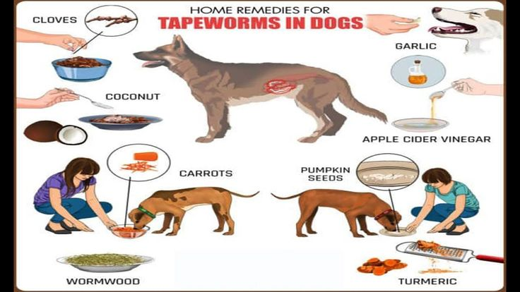 Home remedies for tapeworms in dogs youtube tapeworms