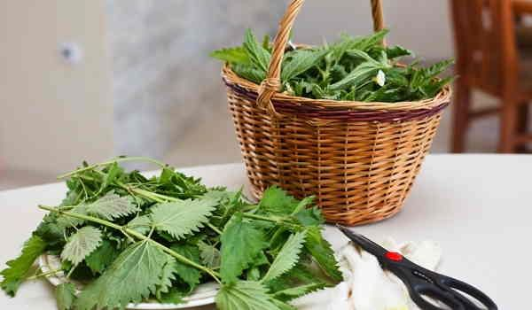 Scopriamo quali sono le erbe spontanee commestibili più comuni che si possono usare in cucina. Possiamo usufruire delle loro proprietà anche con tisane ..