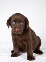ADESTRAMENTO DE CÃES - ADESTRAMENTO PARA CÃES: Adestramento Para Cães - Quando o cachorro fica so...