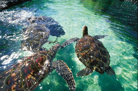 Swimming with Turtles 101 sounds like a class we'd do some extra credit for! Check out these 10 classes to take on #vacation in Maui. #Hawaii