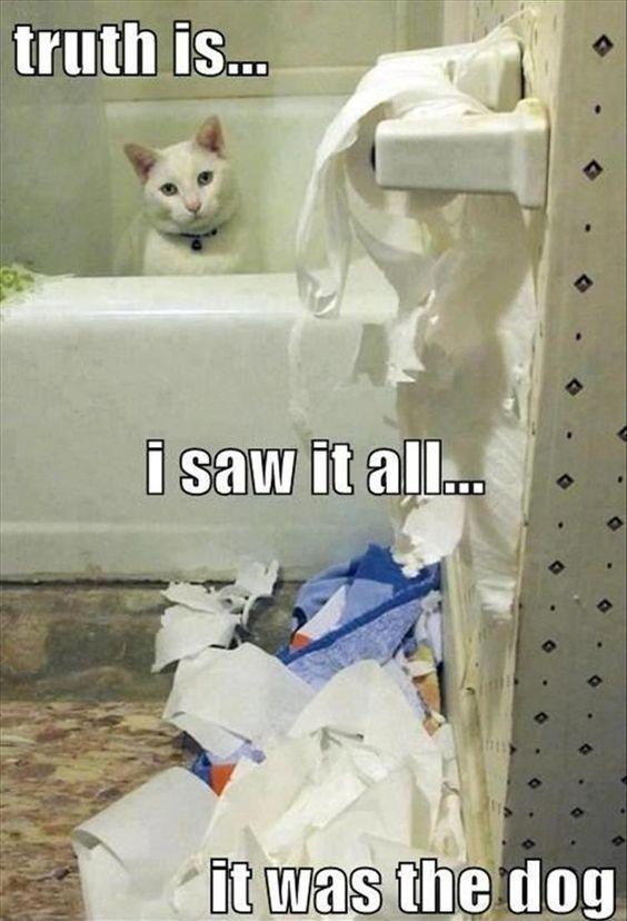 19 White Cat Meme