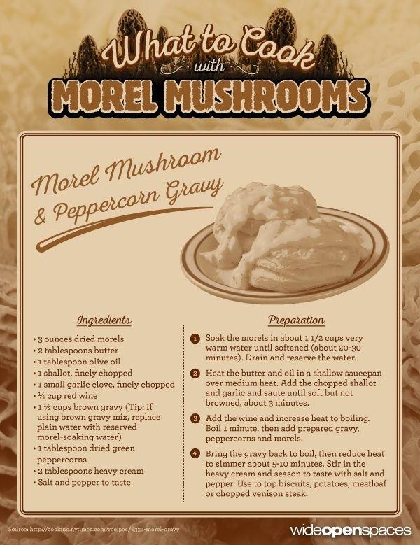 Morel mushroom recipe of the week morel mushroom and for Morel mushroom recipes food network