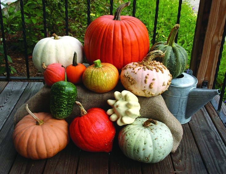 AUTUMN HARVEST DISPLAY - PUMPKIN - SQUASH - GOURD MIX (60-120 DAYS) - Pinetree Garden Seeds - Vegetables