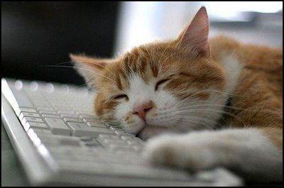 パソコンの上の猫10
