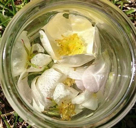 Wilde Rozen water met Bergkristal  Vanochtend liep ik in de duinen en de geur van de wilde roos kwam mij tegemoet, heerlijk zoet geurend en bedwelmend.... De hondsroos is een wilde roos en de roos helpt ons eraan te herinneren hoe ongelooflijk mooi en kwetsbaar de natuur kan zijn. De wilde roos is een bloem dat je hartchakra opent.  Tip: Wilde Rozenwater maken met bergkristal;  Pluk wat geurende wilde rozen in de ochtend als de dauw er vanaf is.  Zet de rozen onder water en laat ze samen met…