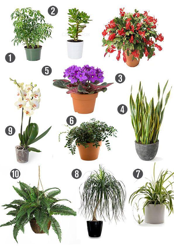 Non Poisonous Plants Cats