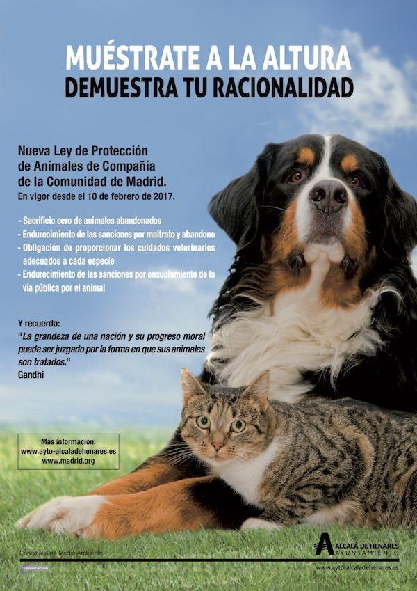 Entra en vigor la nueva Ley de Protección de Animales de Compañía