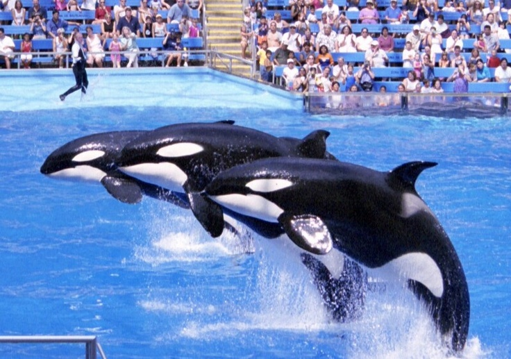 Sea World: We have been to the one in San Antonio and Orlando.... San Antonio was the BEST!!!