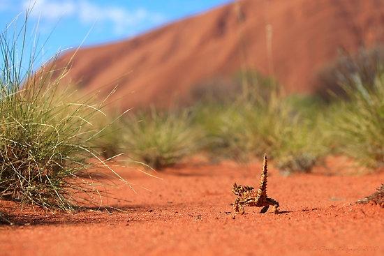 Australian Outback / Uluru