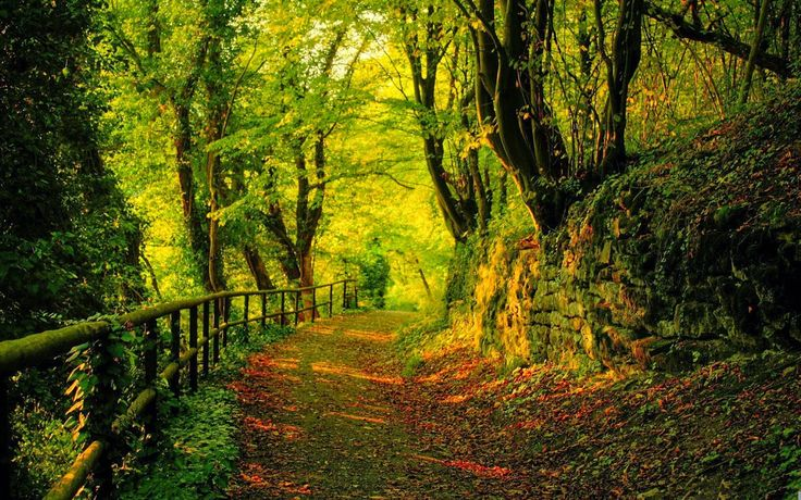 Dat Nature: Hidden Forest Path