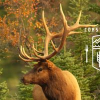 A Boreal Feast with Tourism Yukon and Edible Canada | Vancouverscape