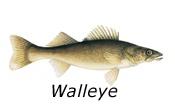 Saskatchewan fish species.