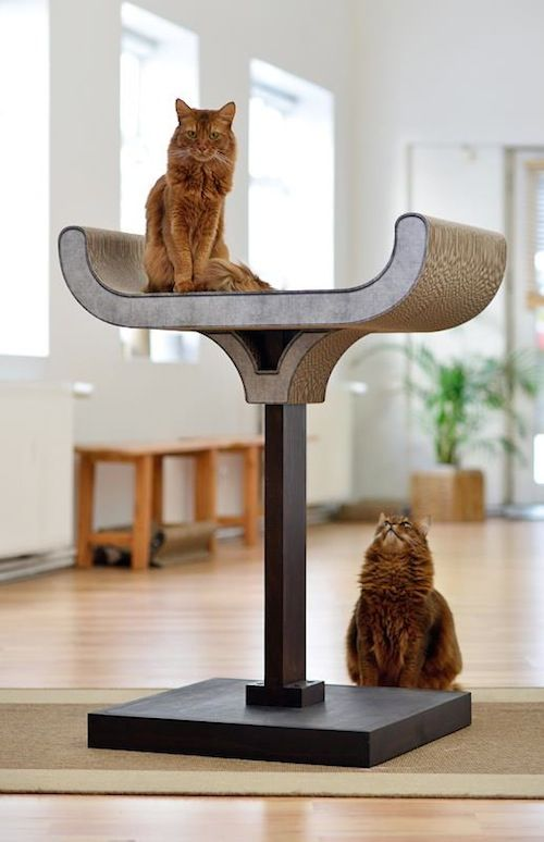 17 best images about everything for kittens cats on pinterest cat products pets and furniture. Black Bedroom Furniture Sets. Home Design Ideas