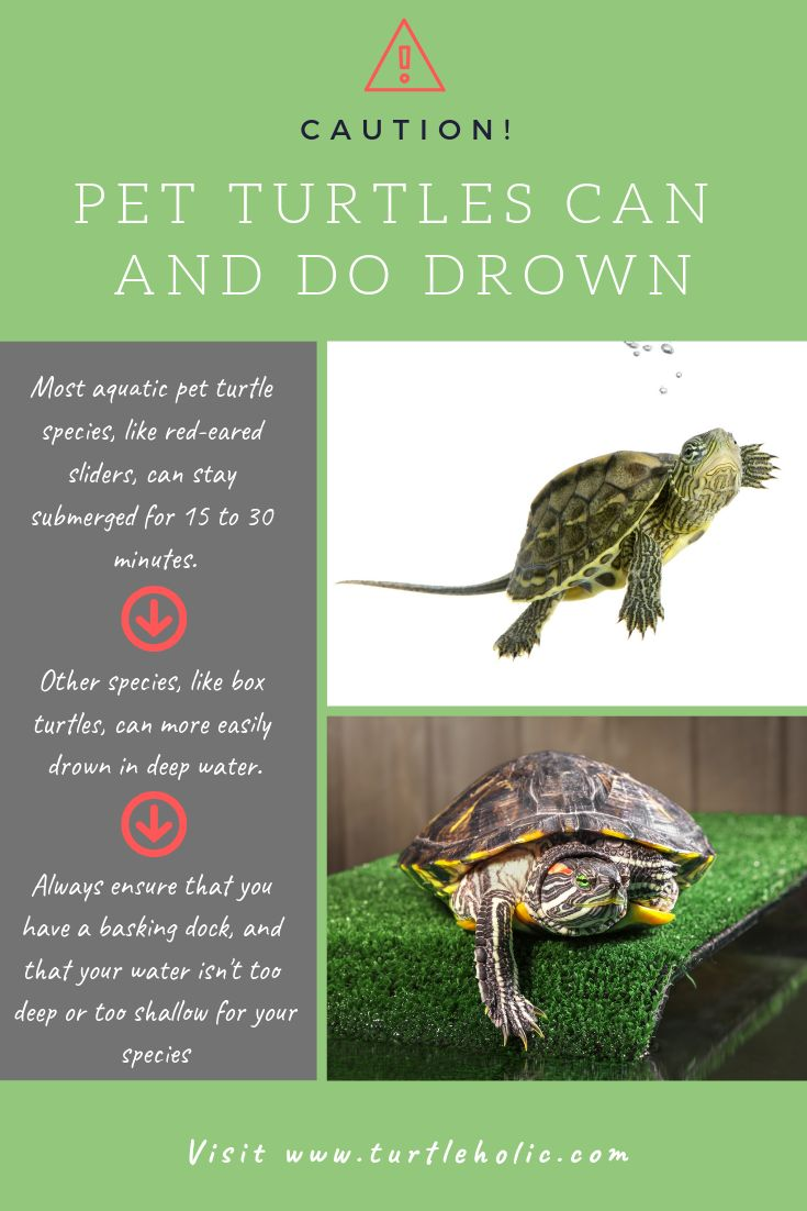 Clear simplified howto guides for pet turtle owners