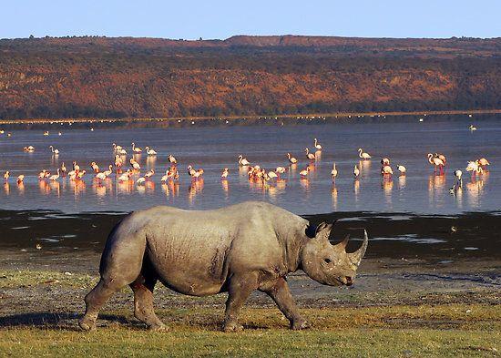 Nakuru National Park, Kenya--perfect for a diy safari!!