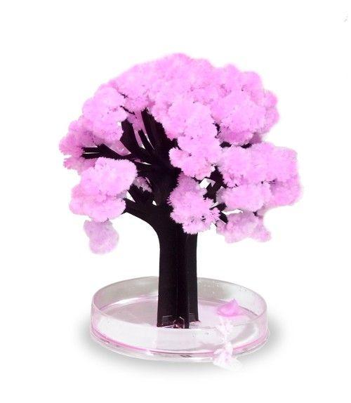 Mystieke Sakura-Boom. Zelf je eigen boompje in bloei zetten, hoe leuk is dat!