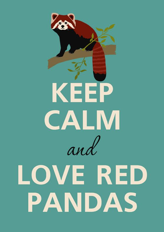 Keep calm and love red pandas Art Print Keep by KCalmGallery