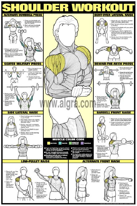 Bruce Algras Shoulder Workout Poster presents the most effective weight training exercises to develop the deltoid muscles for men and women. Each of eight exercises instruct and illustrate how to strengthen and shape the shoulder muscles in a quick and safe manner. This fitness routine and body building poster is full of great education and will enhance any weight room at home or at the health club. Lose weight and build muscle, using protein powders!