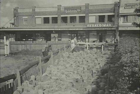 Loading sheep... Wentworth Falls ..1920's /30's
